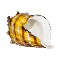 edg-conchiglia-vetro-gialla-2